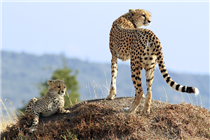 , Kruger National Park Holiday Packages