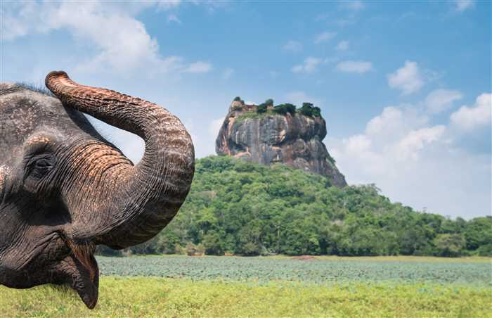 Elephant in Sigiriya lion rock, Sri Lanka