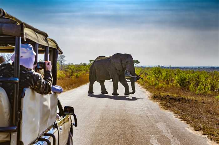 South Africa. Safari tour in Kruger National Park