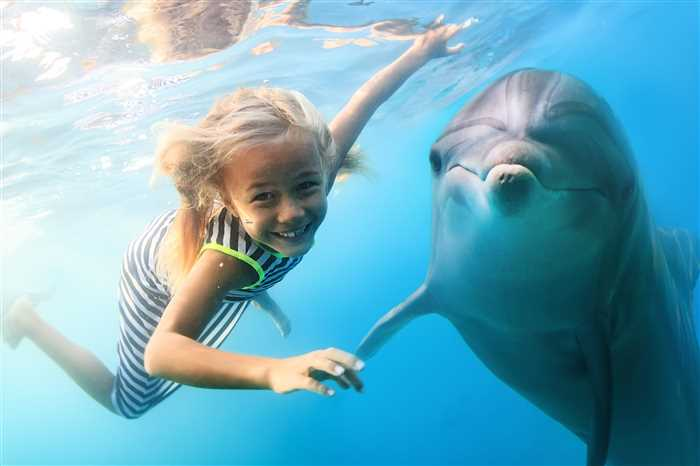 Dolphin Bay, Atlantis - Top Attraction and Places to visit in Dubai