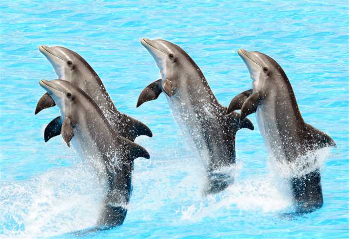 Dubai Dolphinarium - top attractions and places to visit in Dubai