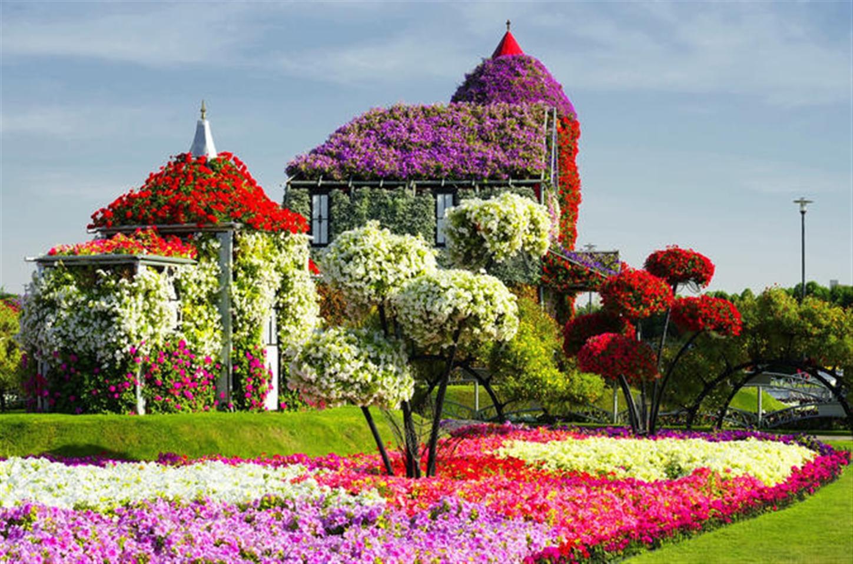 miracle garden and global village dubai la vacanza travel