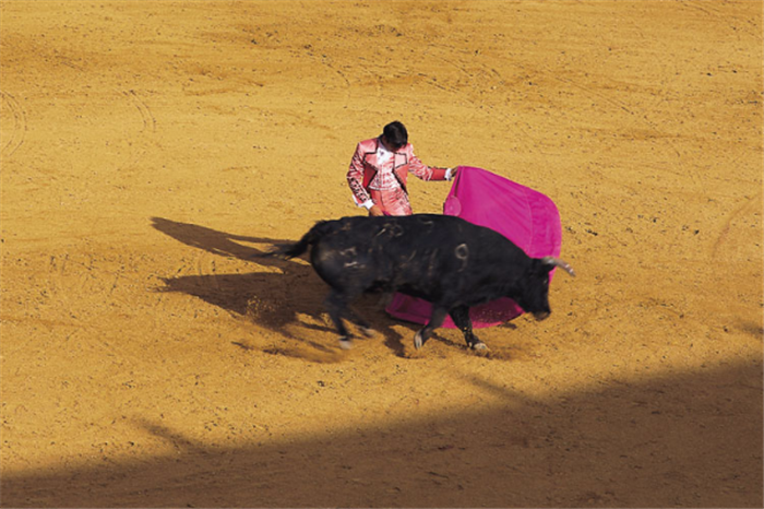 Bull Fight Spain , Best Of Spain