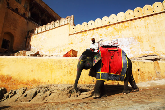 Elephant , Golden Triangle Tour - Delhi, Agra, Jaipur