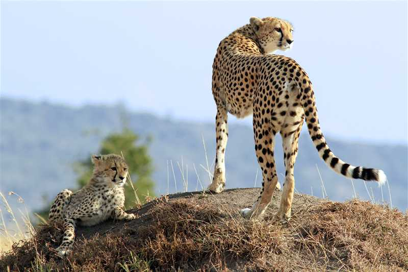 Best of Kruger National Park Luxury Safari in South Africa with Johannesburg and Cape Town