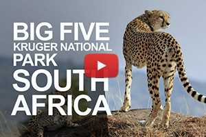 Meet the Big Five 5 at Kruger National Park, South Africa